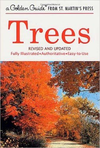 eastern-trees-2